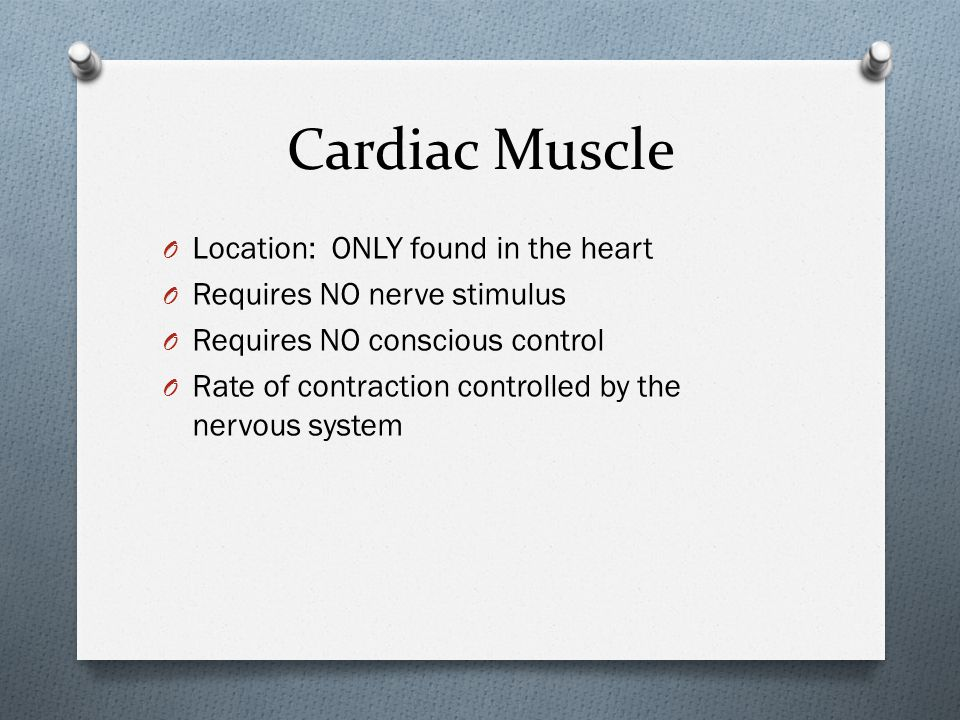 Cardiac Muscle Location: ONLY found in the heart