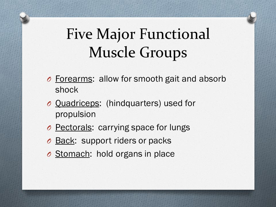 Five Major Functional Muscle Groups