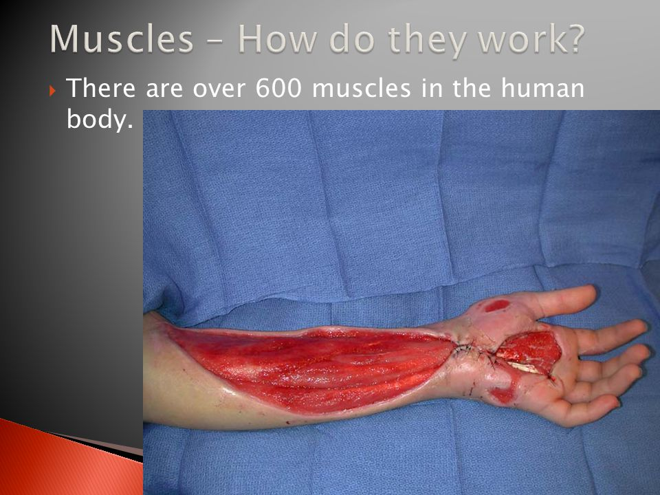 Muscles – How do they work