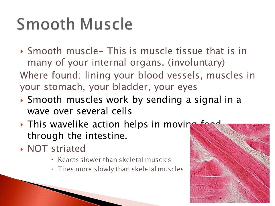 Smooth Muscle Smooth muscle- This is muscle tissue that is in many of your internal organs. (involuntary)