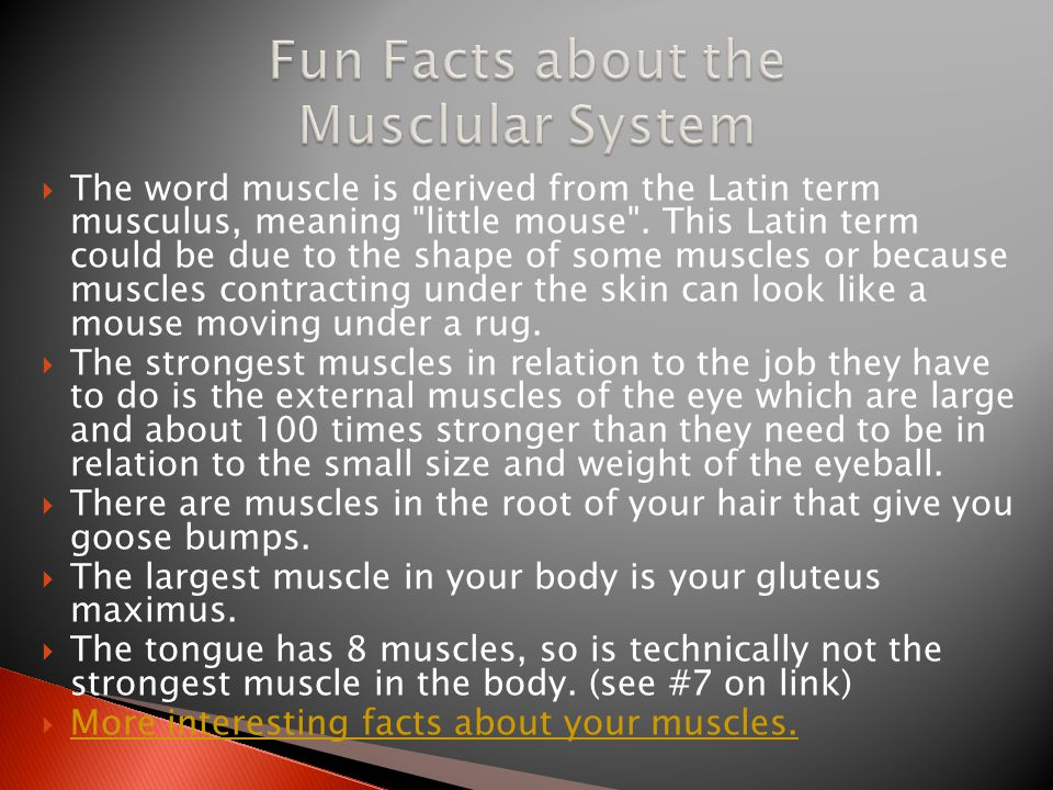 Fun Facts about the Musclular System