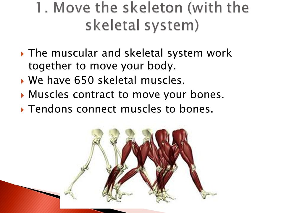 1. Move the skeleton (with the skeletal system)