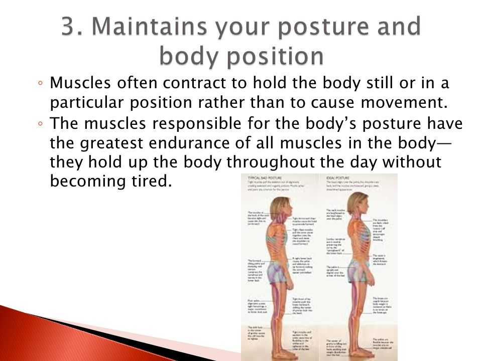 3. Maintains your posture and body position