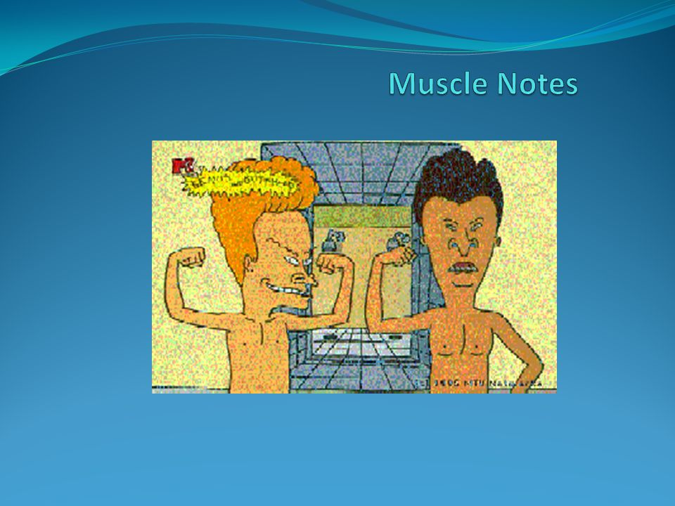 Muscle Notes