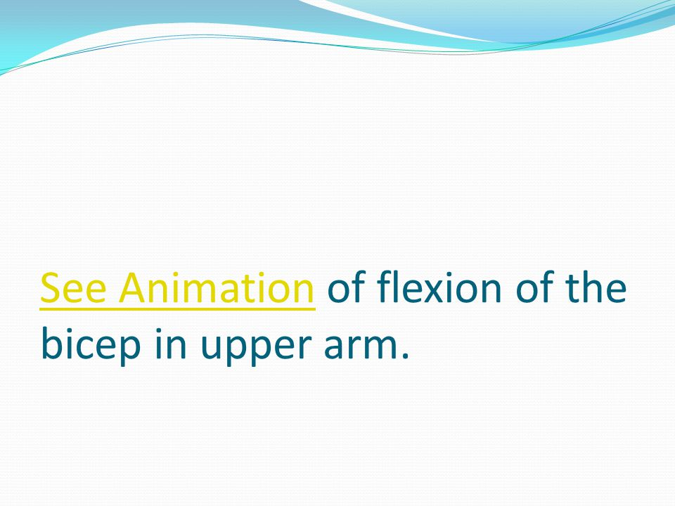 See Animation of flexion of the bicep in upper arm.