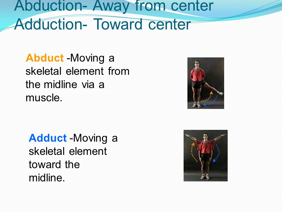 Abduction- Away from center Adduction- Toward center