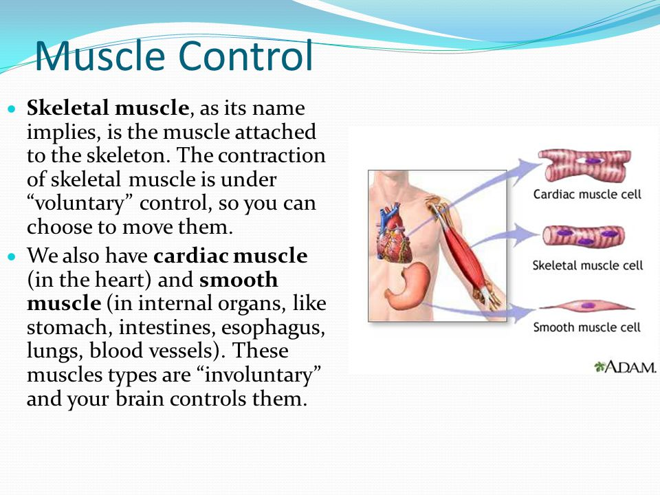 Muscle Control
