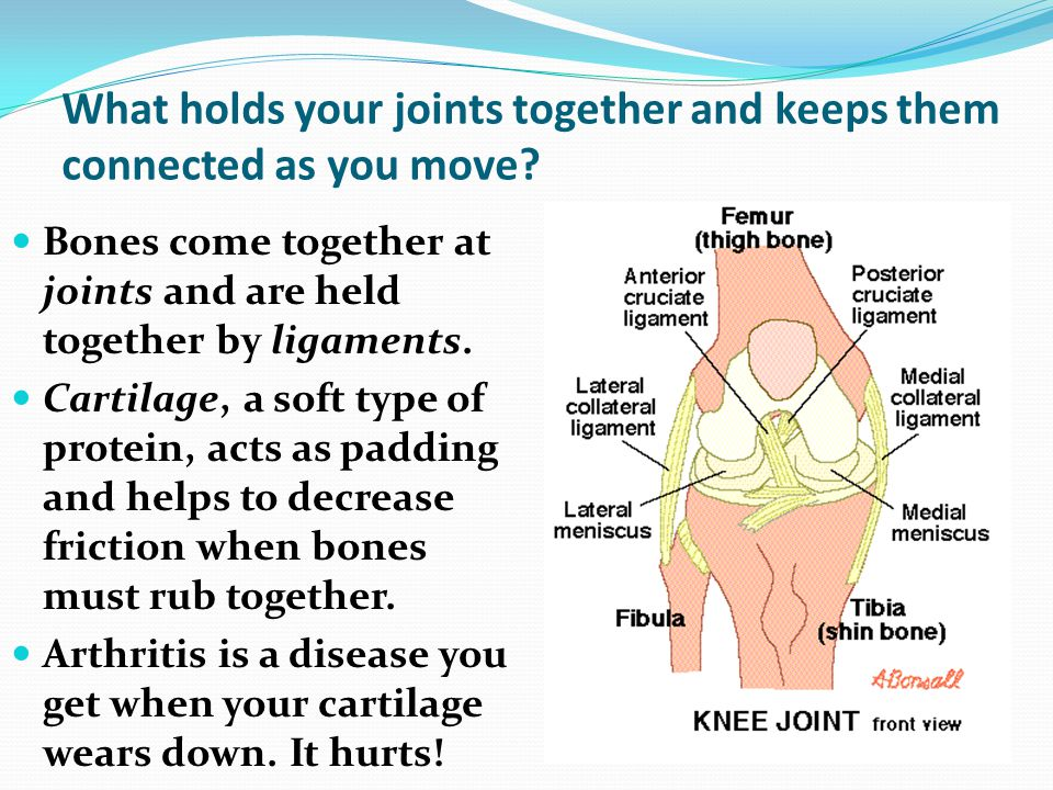 What holds your joints together and keeps them connected as you move