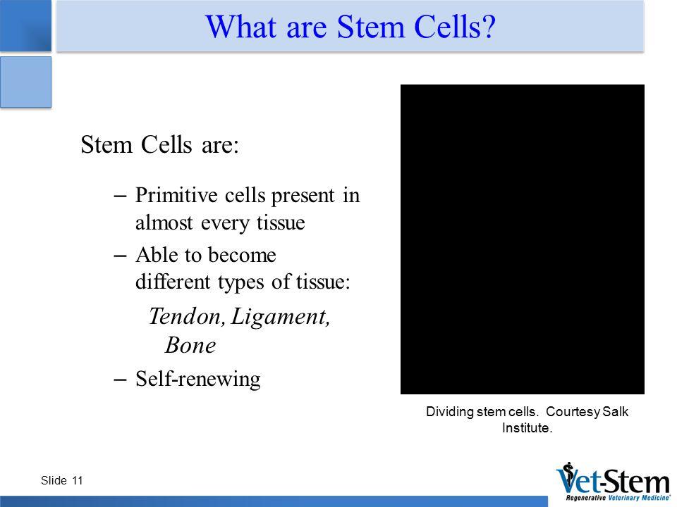 Dividing stem cells. Courtesy Salk Institute.