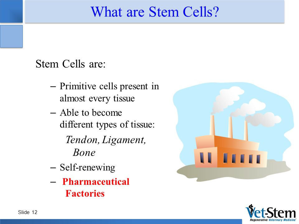 What are Stem Cells Stem Cells are: Tendon, Ligament, Bone