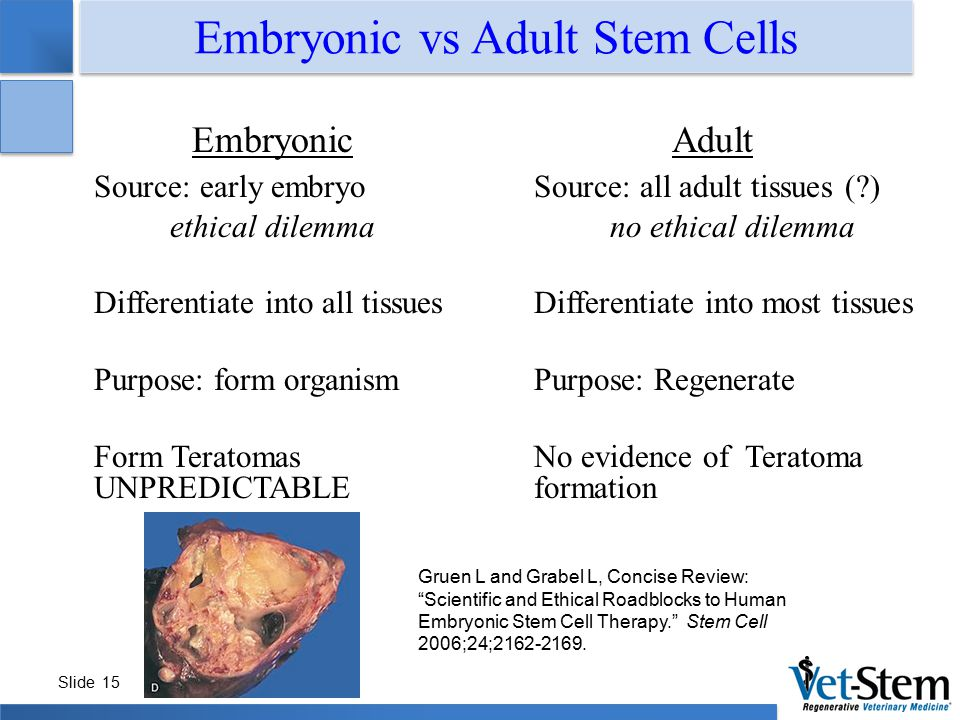 the ethical debate of embryonic stem Embryonic stem cells offer hope for new therapies, but their use in research has been hotly debated presenting the issues, rationale and key ethical arguments.