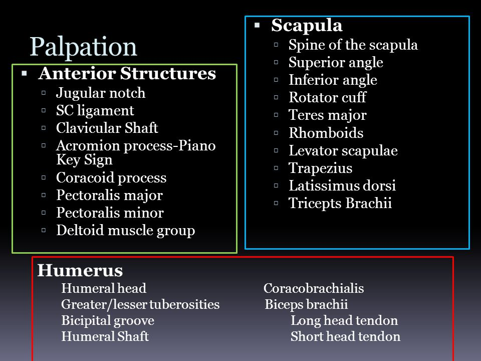 Palpation Scapula Anterior Structures Humerus Spine of the scapula