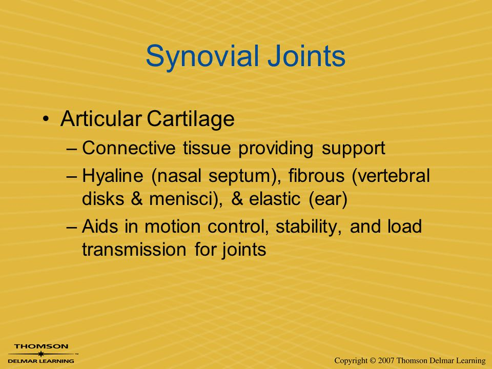 Synovial Joints Articular Cartilage