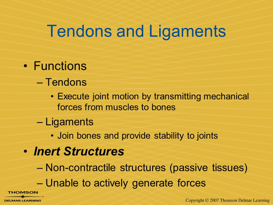 Tendons and Ligaments Functions Inert Structures Tendons Ligaments
