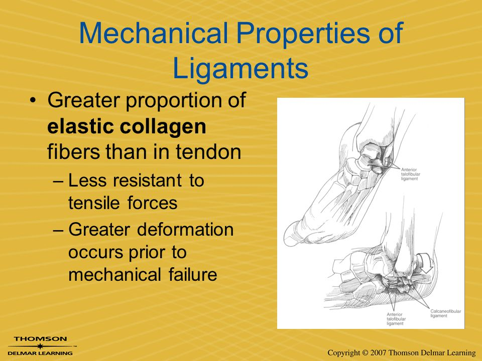 Mechanical Properties of Ligaments