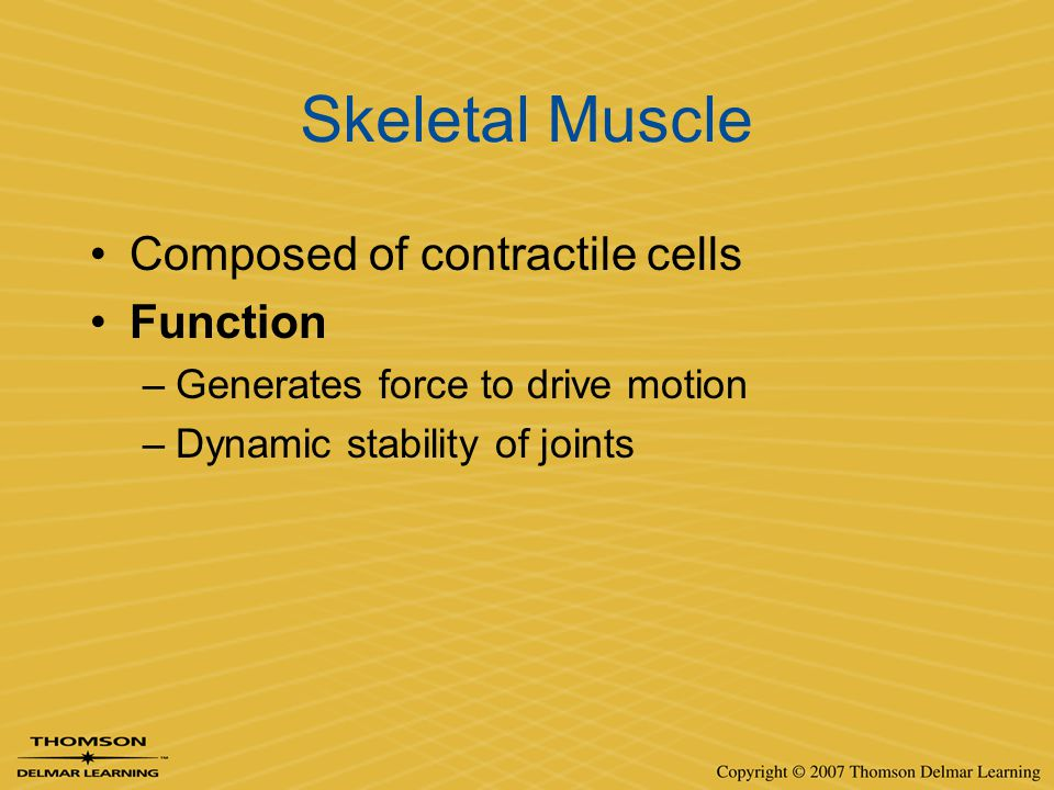 Skeletal Muscle Composed of contractile cells Function
