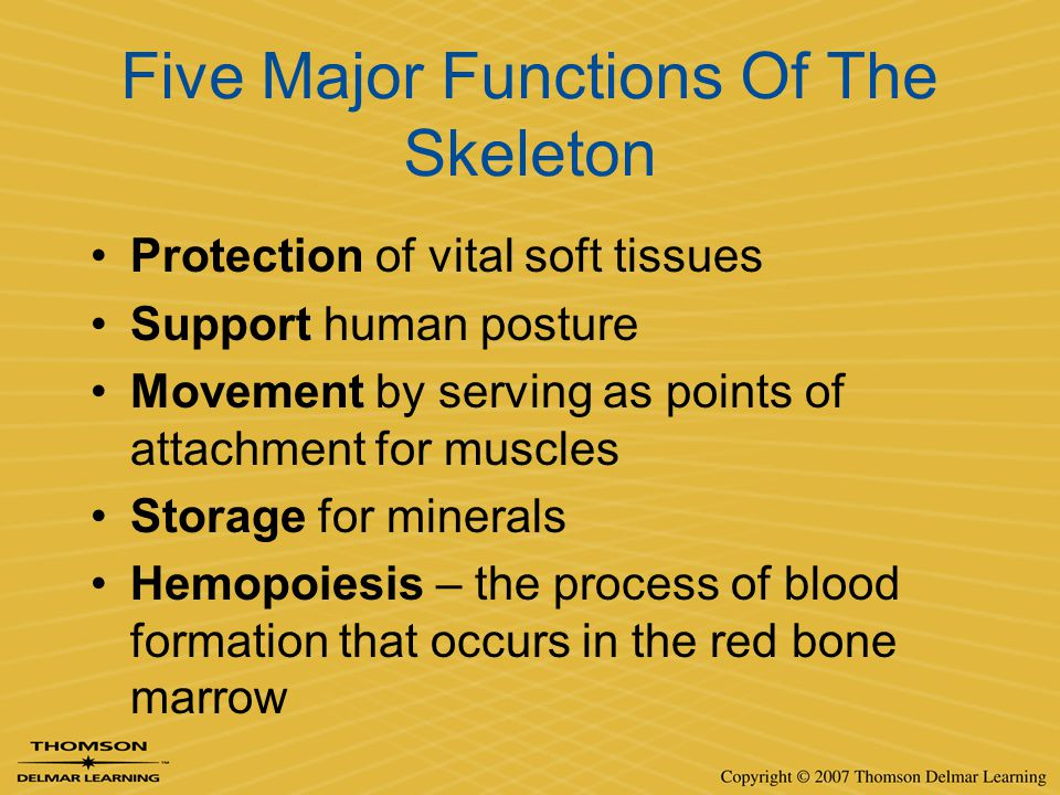 Five Major Functions Of The Skeleton