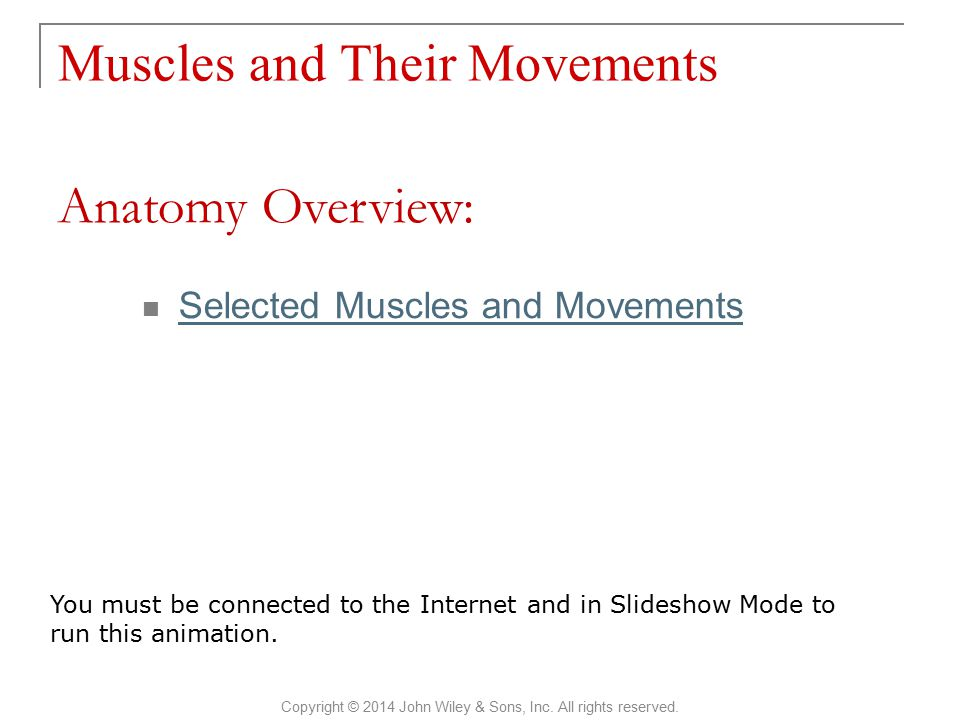 Muscles and Their Movements