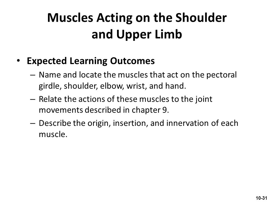 Muscles Acting on the Shoulder and Upper Limb