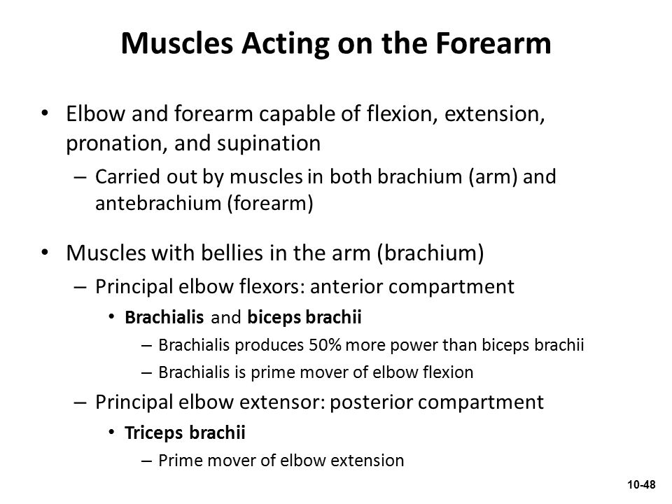 Muscles Acting on the Forearm
