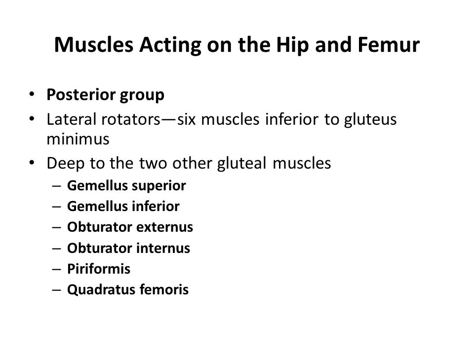 Muscles Acting on the Hip and Femur