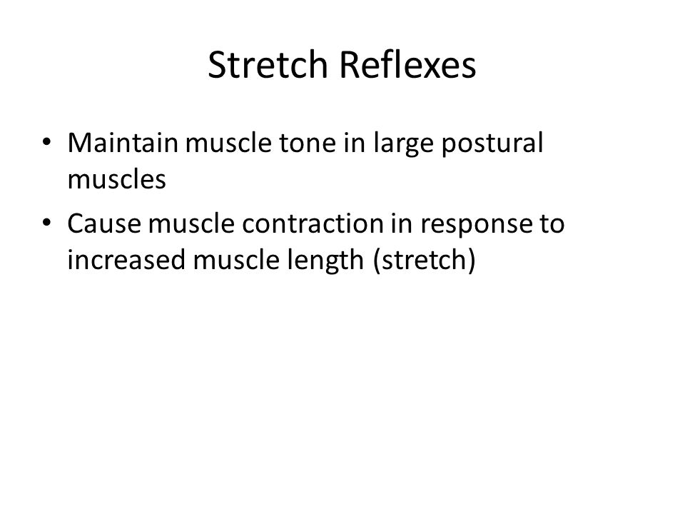 Stretch Reflexes Maintain muscle tone in large postural muscles