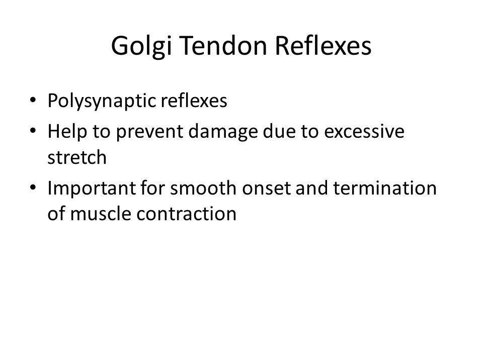 Golgi Tendon Reflexes Polysynaptic reflexes