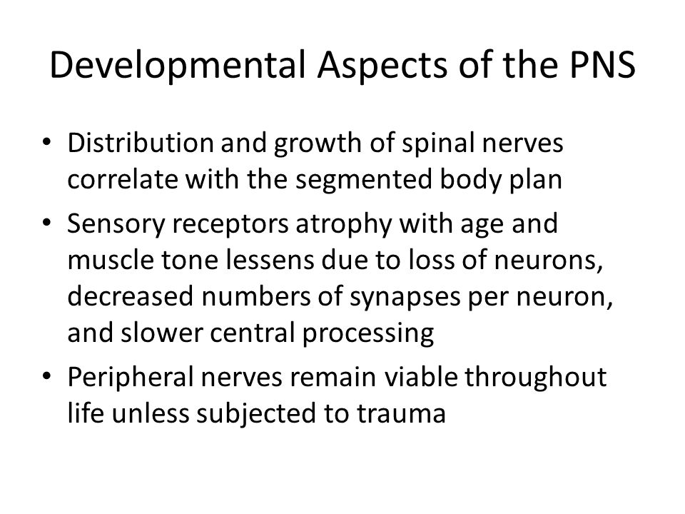 Developmental Aspects of the PNS