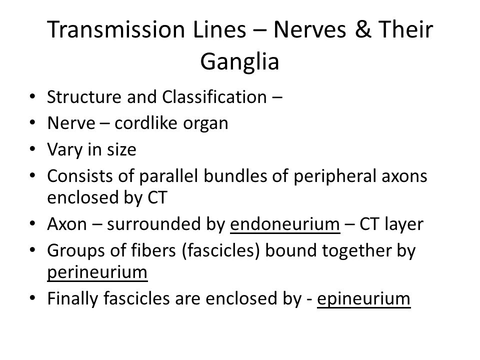 Transmission Lines – Nerves & Their Ganglia