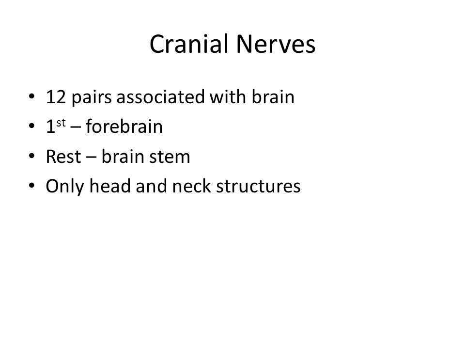 Cranial Nerves 12 pairs associated with brain 1st – forebrain