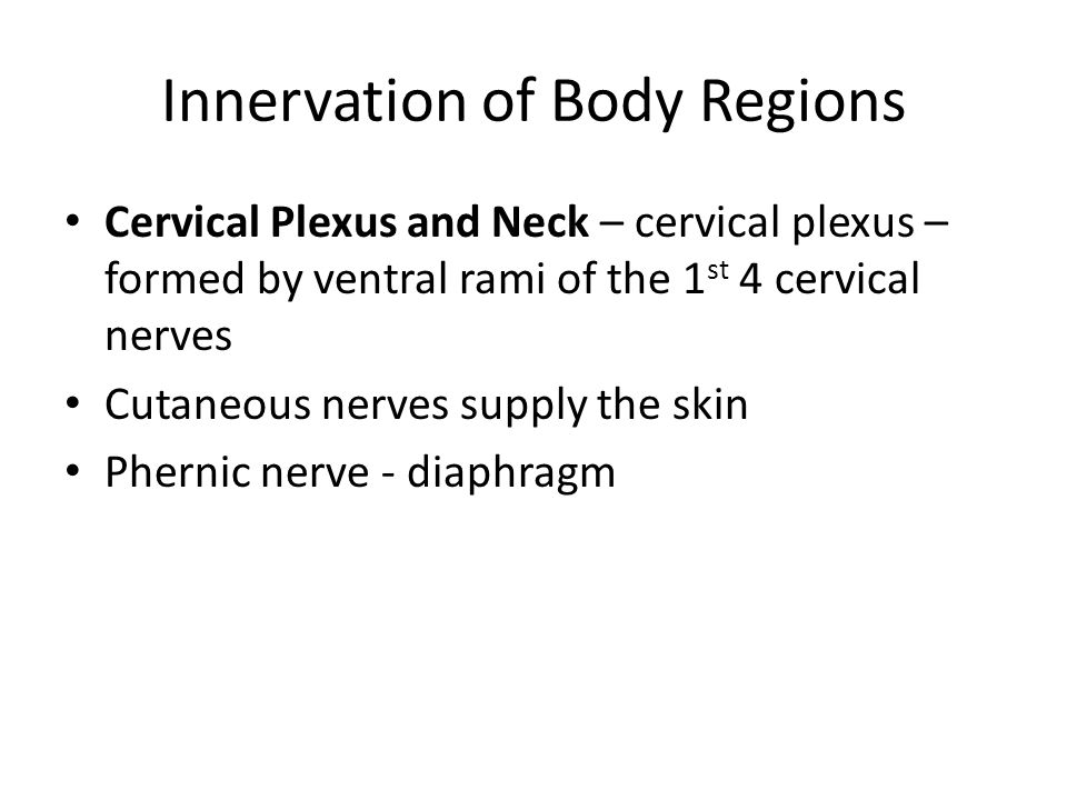 Innervation of Body Regions