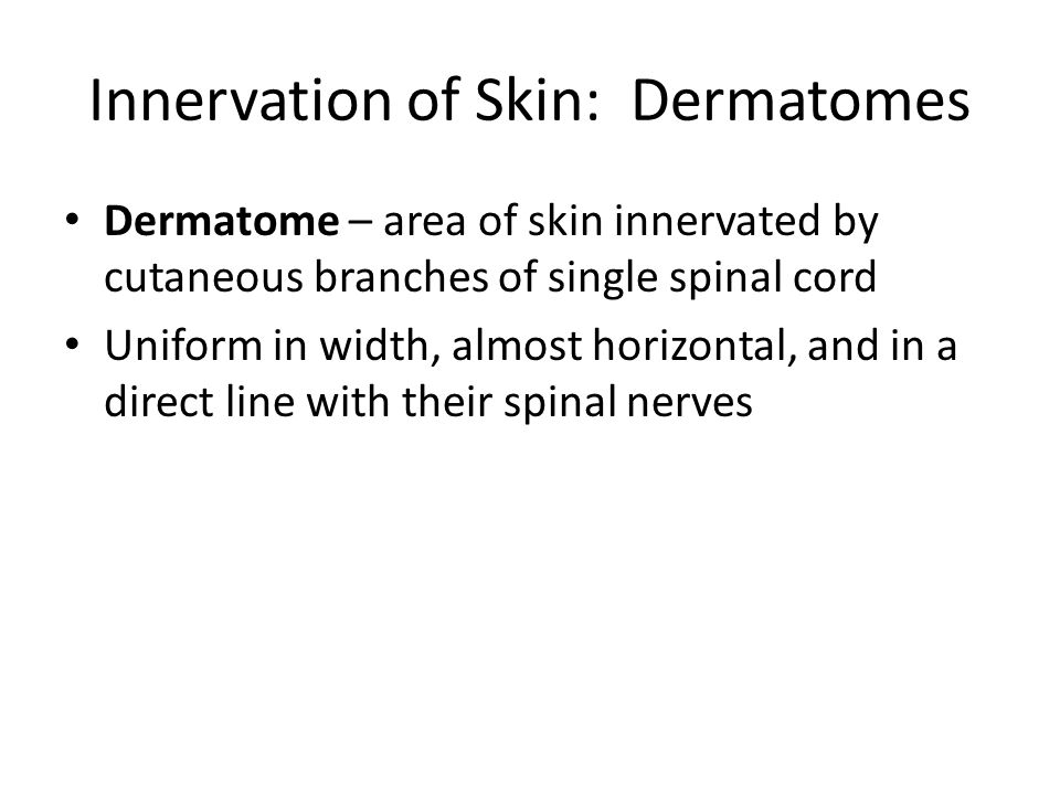 Innervation of Skin: Dermatomes