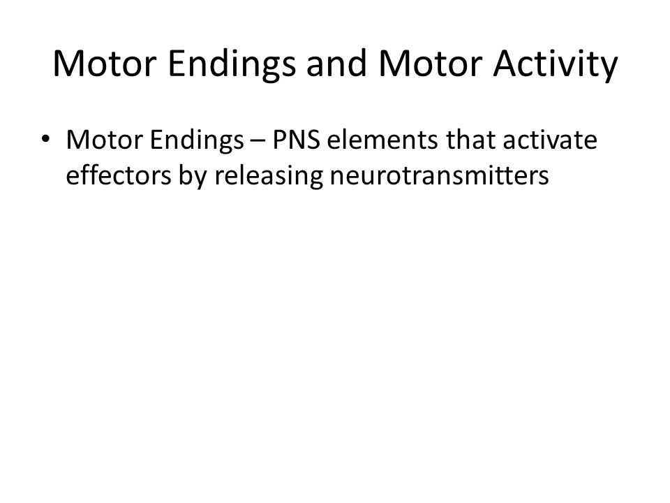 Motor Endings and Motor Activity
