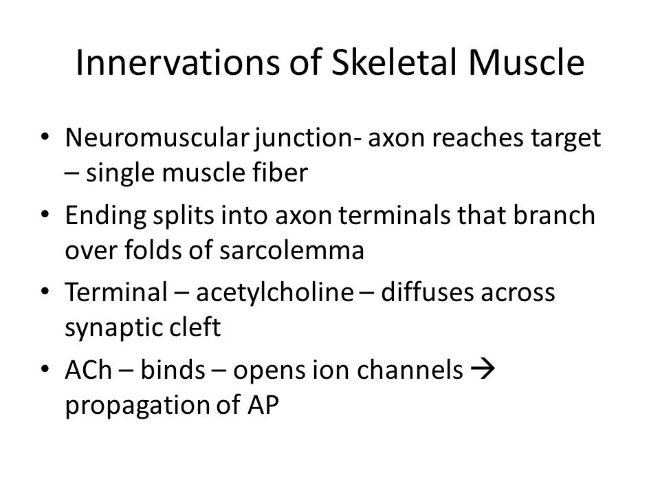 Innervations of Skeletal Muscle