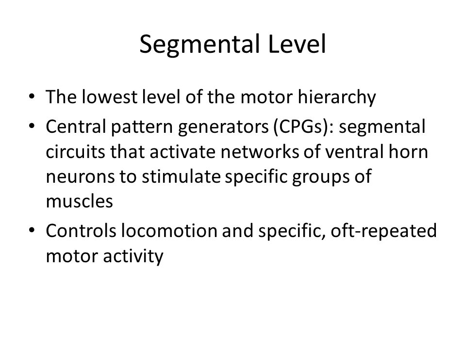 Segmental Level The lowest level of the motor hierarchy