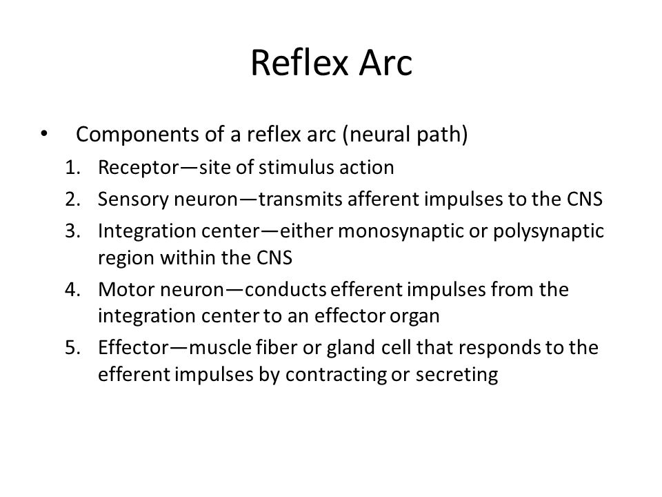 Reflex Arc Components of a reflex arc (neural path)