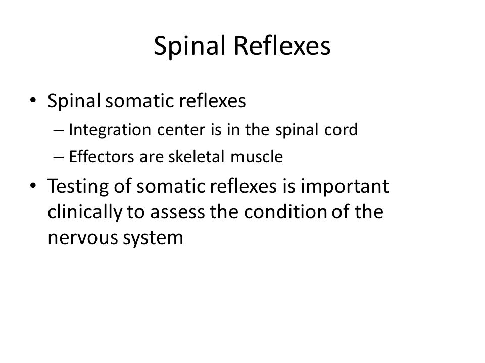 Spinal Reflexes Spinal somatic reflexes
