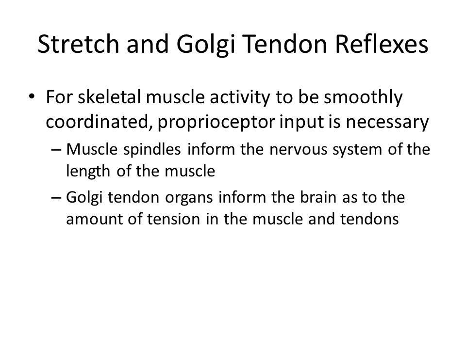 Stretch and Golgi Tendon Reflexes