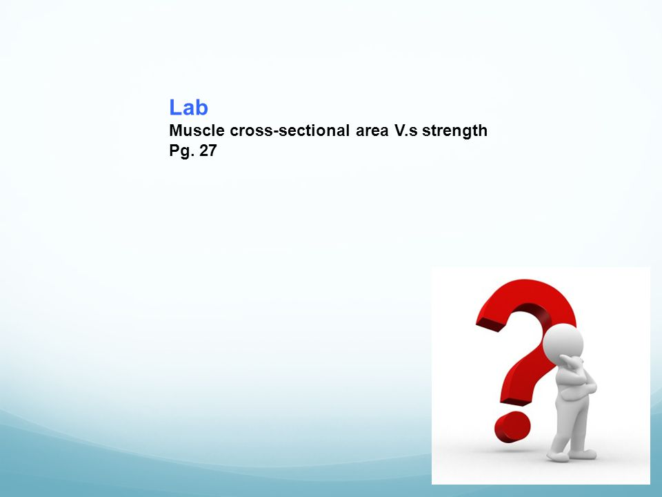Lab Muscle cross-sectional area V.s strength Pg. 27