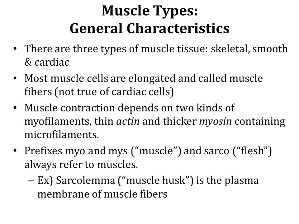 Muscle Types: General Characteristics