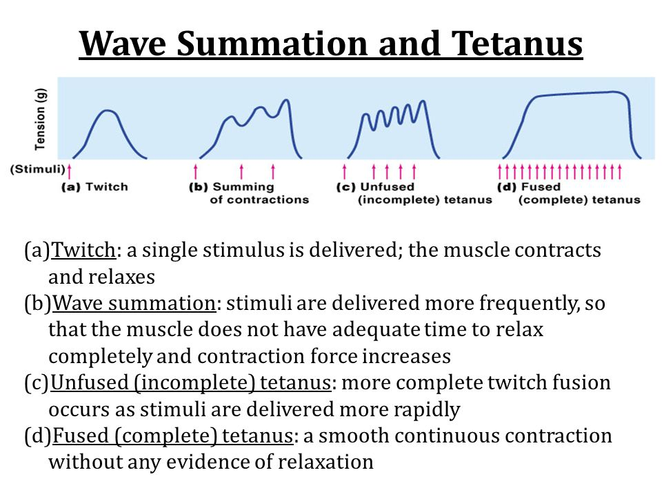 Wave Summation and Tetanus