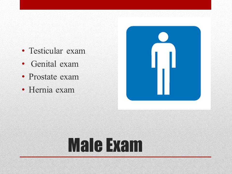 Testicular exam Genital exam Prostate exam Hernia exam Male Exam