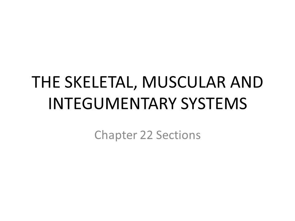 THE SKELETAL, MUSCULAR AND INTEGUMENTARY SYSTEMS