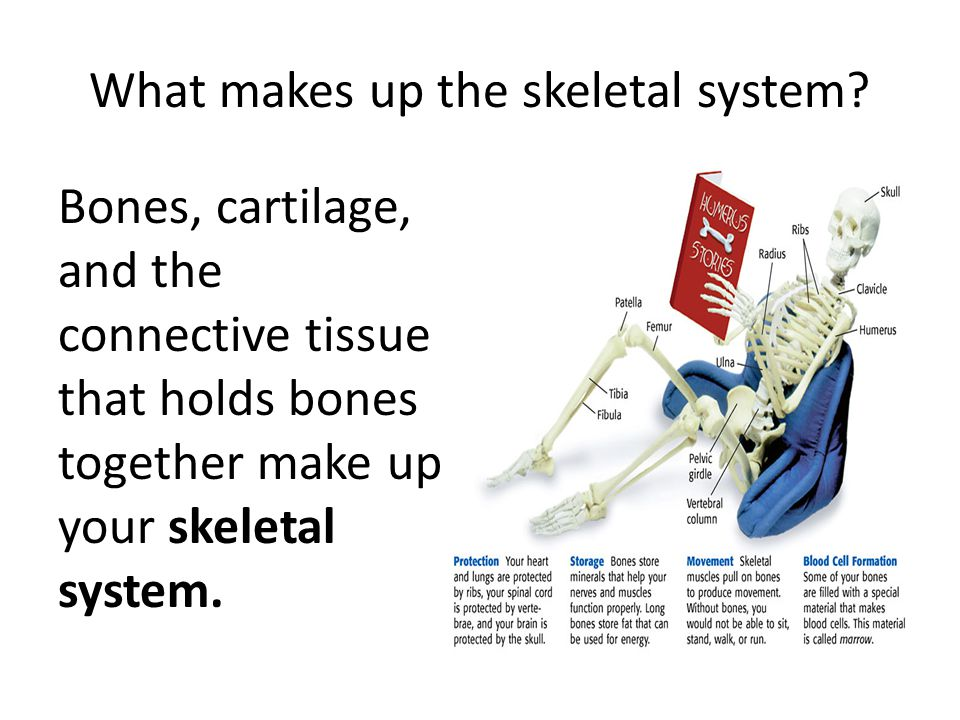 What makes up the skeletal system