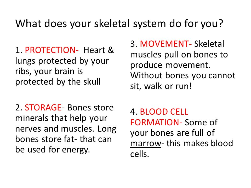 What does your skeletal system do for you