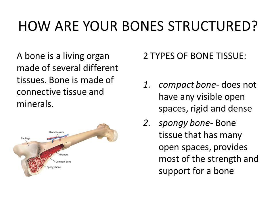 HOW ARE YOUR BONES STRUCTURED