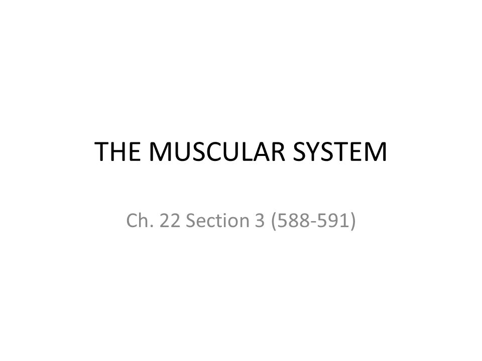 THE MUSCULAR SYSTEM Ch. 22 Section 3 (588-591)