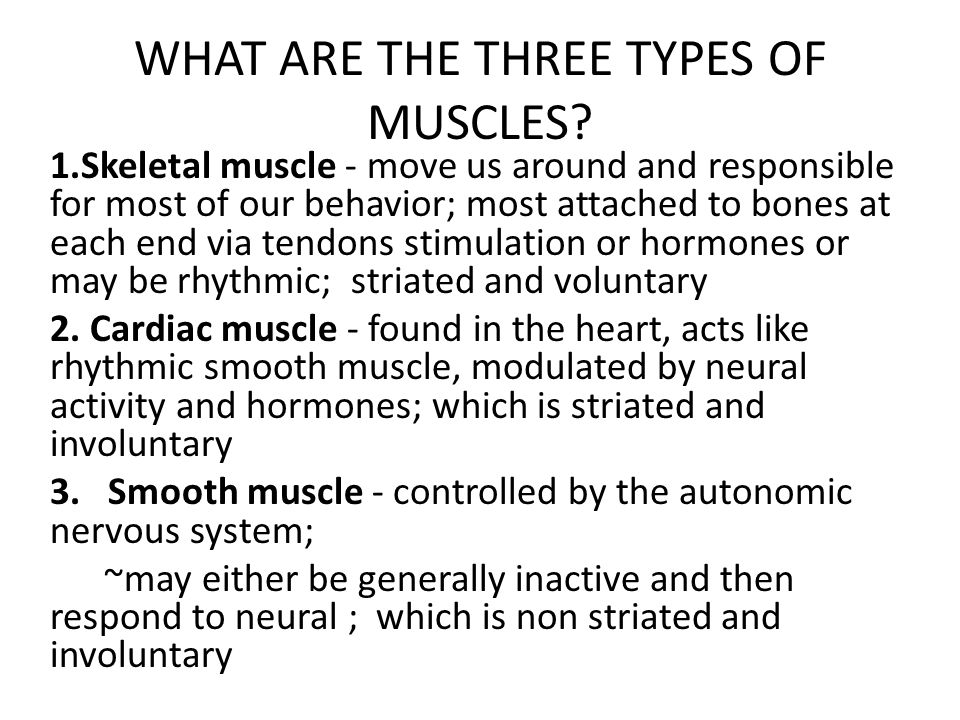 WHAT ARE THE THREE TYPES OF MUSCLES
