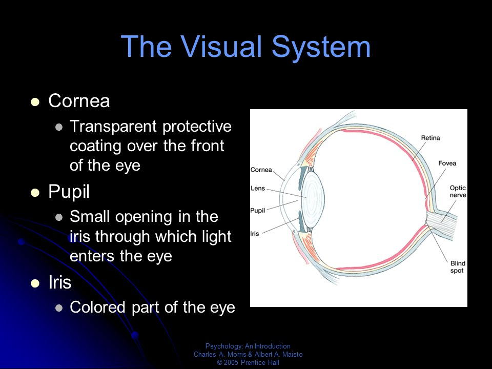 The Visual System Cornea Pupil Iris