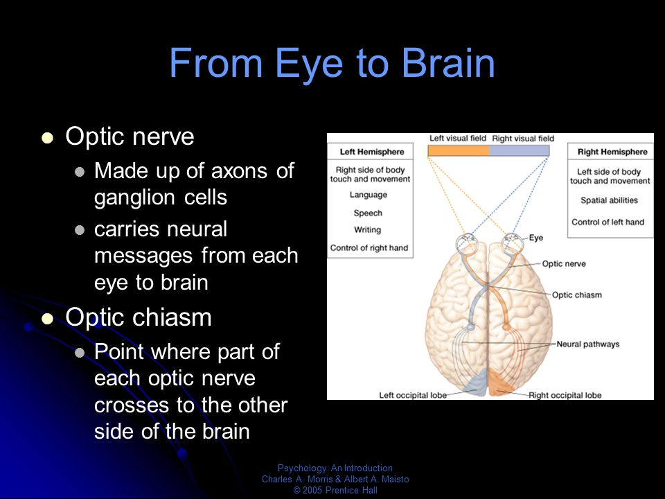 From Eye to Brain Optic nerve Optic chiasm